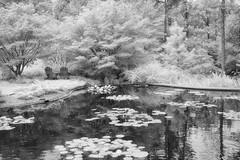 Pond Memories (Jim Liestman) Tags: ir bw dukegardens pond garden watergarden trees