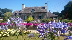 Flower power (AieshaB) Tags: flowers flora agapantus nantesbrest canalnantesbrest bretagne brittany france