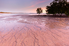 Sands of time (Louise Denton) Tags: mangroves eastpoint darwin nt northernterritory patterns sand sea ocean mudflats tropical pink magenta sunset