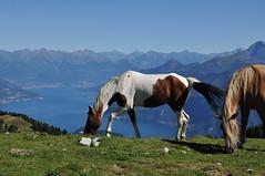 DSC_5504 (giuseppe.cat75) Tags: mountains sanprimo comolake landscape nikon lake horses italy italia lombardia