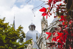 The cathedral (neus_oliver) Tags: cathedral dom germany plants red city travel europe discover church architecture beautiful deutschland aachen tree dome sky