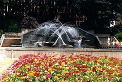 Civic Park Fountain, Newcastle, NSW, January 1989 (Coalfields Heritage Group) Tags: civicparkfountain fountains figtrees civicpark newcastlensw newcastle coalfieldsheritagegroup percysternbeckcollection nsw australia book22 sternbeckbk220189c011