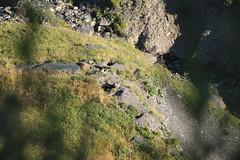 Les marmottes - Croisse Baulet. 2236m (Stefho74) Tags: stefho74 sallanches croissebaulet rhonealpes hautesavoie cordon combloux randonneenmontagne promenade
