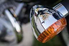Blinker (Sylsine) Tags: fahrzeuge motorrad zweirad blinker chrom