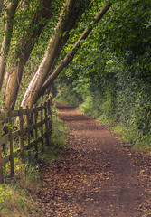 lonely path - P (markhortonphotography) Tags: path surrey macro thatmacroguy nature surreyheath tunnel green tilford footpath markhortonphotography fence