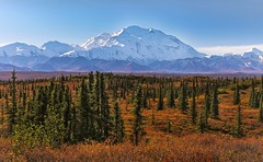 The High One in Autumn (Cole Chase Photography) Tags: denalinationalpark alaska autumn fall canon eos5dmarkiii