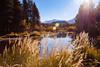 Fall grasses (beyondramen) Tags: tuolumnemeadows yosemite tuolumneriver autumn