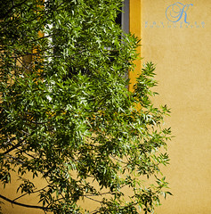 Green and Yellow (Kevin Vyse Photography) Tags: summer man colour building tree green nature yellow contrast photograph stucco 2012 imagery layered kvphotography kevinvyse