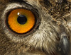 Eye of the Owl. Southport. Explore 16th July (Pioneer20) Tags: photoshop canon70200l specanimal canon60d Yahoo:yourpictures=yoursummer