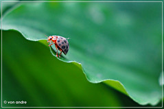Hey There! (Von Andre) Tags: macro 35mm nikon insects bugs ladybug d90 me2youphotographylevel1