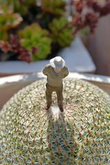 Asuntos Espinosos 106 (quijano M) Tags: cactus cacti toy toys plantas almería miniaturas crasas plantascrasas asuntosespinosos