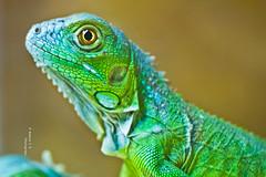Green (    , ) Tags: green animal canon gulf d qatar t3i  qtr    600d ameera q6r   amoora      qa6ar