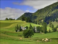 Paysage du Vercors ...... à Méaudre (lo46) Tags: france nature rural montagne alpes plateau paysage vercors rhonealpes isère lo46 méaudre artistoftheyearlevel5 niceasitgets~level6