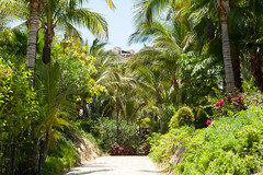 Beautiful tropical plants along the paths (thewanderingeater) Tags: mexico hotel resort loscabos presstrip loscabosmexico oneonlypamilla 5starluxuryhotel pamillaloscabosmexico 5starluxuryresort