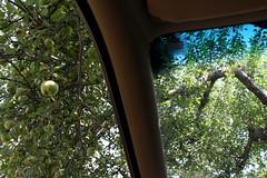 Annapolis Royal, NS (Avard Woolaver) Tags: light canada colour photo flickr novascotia orchard apples canondslr annapolisvalley digitalimage annapolisroyal annapoliscounty sociallandscape canoneos60d avardwoolaver avardwoolaverphoto