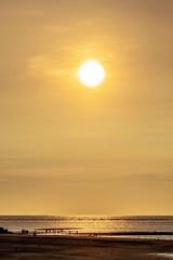 (Digital_trance) Tags: sunset sky sun moon bird 20d love nature sunrise canon landscape landscapes dusk taiwan sigma windmills lovers wetlands 夕陽 台灣 太陽 wetland bif lightrays 高美溼地 raysoflight 生態 鳥 birdinflight 濕地 夕照 風車 星空 月亮 高美 攝影 愛情 gaomei 台灣之美 光芒 戀人 70d 40d 彩霞 萬丈光芒 canon40d 高美夕照 gaomeiwetland gaomeiwetlands 5dmarkii 5d2 台灣風采 5dii canon5dmarkii eos5dmarkii canon5d2 canon5dmarkiii 5d3 莞草 beautyoftaiwan canon70d 5diii