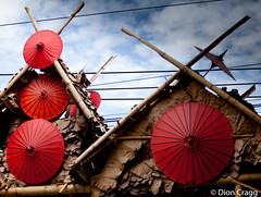Red Sunshades (Dion Cragg) Tags: red umbrella thailand parasol chiangmai umbrellas parasols bosang colorsinourworld redparasols