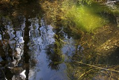 Surface Time (Reptilian_Sandwich) Tags: shadow wild brown mountains newmexico green pool leaves forest walking morninglight spring sticks log stream solitude hiking sunny pebbles solidarity ripples algae twigs gravel blackrange eastrailroadcanyon