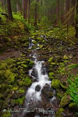 Creek Along Sol Duc Falls Trail (Michael Pancier Photography) Tags: water creek forest river us washington stream unitedstates portangeles waterfalls cascades pacificnorthwest streams olympicnationalpark americathebeautiful creeks fineartphotography canyoncreek travelphotography landscapephotography commercialphotography naturephotographer michaelpancierphotography landscapephotographer fineartphotographer michaelapancier solducfallstrail americasnationalparks wwwmichaelpancierphotographycom