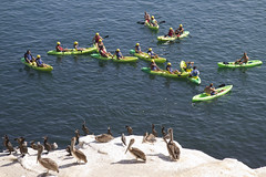 La Jolla Kayakers checking out some cormorants and pelicans (San Diego Shooter) Tags: sandiego lajolla kayaking lajollacove lajollakayaking lajollacovekayaking