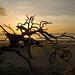 Driftwood Beach 7