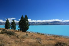 Lake Pukaki (Albert Freeman) Tags: trees newzealand lake pine landscape bluesky stunning southisland bluelake breathtaking lakepukaki 2012 glaciallake rockflour auraki