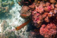 P1000341 (olmidi) Tags: cuba kuba isla caribe karibik island oldtimer varadero trinidad cienfuegos mar ocean