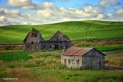 Palouse Barns_161827 (rjmonner) Tags: palouse washington loess wheat farming agriculture agronomy green barns abandoned rustic forgotten aged
