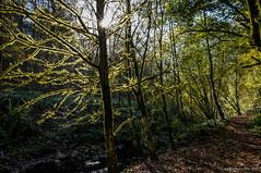Contorneando (SantiMB.Photos) Tags: 2blogger 2tumblr 2ig rboles trees luz light contraluz backlight baztn navarra otoo vacaciones2015 igantzi espaa esp