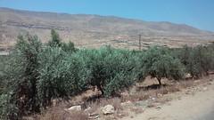 20160710_112757 (Calvary Missions) Tags: israel olive trees rocks