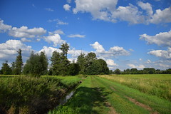 early summer (JoannaRB2009) Tags: path road meadow nature ditch grass green sky blue clouds trees landscape view summer dzkie lodzkie polska poland feliksw dolinaneru