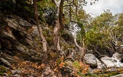 Dimosaris Ravine View of the Side Slope (gliak00) Tags: dimosari euboea greece kallianou karistos lenosei gorge landscape ravine rock water waterfall evia thessaliastereaellada summervacations