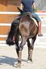 IMG_0387 (dreiwn) Tags: dressurprüfung dressurreiten dressurpferd ridingarena reitturnier reiten reitplatz reitverein reitsport ridingclub equestrian horse horseback horseriding horseshow pferdesport pferd pony pferde tamronsp70200f28divcusd dressur dressuur dressyr dressage