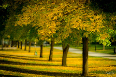 Fall start  (T.ye) Tags: tree trees bokeh lighting landscape leaves plant outside ourdoor fall yellow green todd ye