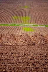 DSC_0343 Valley jpg (normaltoilet/ LSImages) Tags: pei princeedwardisland nikon d40 2016 valley dirt red clay soil iron field plowed furrows