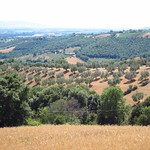 "Tuscan Countryside with Olive Trees <a style=""margin-left:10px; font-size:0.8em;"" href=""http://www.flickr.com/photos/14315427@N00/7511875364/"" target=""_blank"">@flickr</a>"