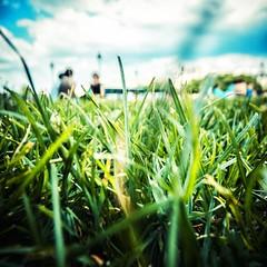 ~ an illusion of summer ~ (Janey Kay) Tags: summer paris sommer été picnik wormseyeview inthegrass onthegrass janeykay viewfromthegrass may2012 panasoniclumixdmclx5 mai2012 lepointdevuedunverdeterre