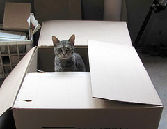 Your friends say I need a bigger box.... (livingglassart home of oddballs and oddities) Tags: critter inabox tabbycat boxinspector outofabox