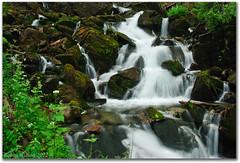 Rock Creek Cascades (Robin-Wilson) Tags: waterfall moss colorado cascades wildflowers crestedbutte rockcreek gunnisonnationalforest cplfilter nikon200 schofieldpass