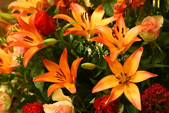 Lilies (Linton Snapper) Tags: flowers orange canon lily lilies churchflowers tonysmith