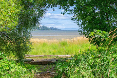 Natural Frame (PRS Images) Tags: trees water britishcolumbia estuary vancouverisland courtenay comoxvalley colorefex nikond7000 ourdailychallenge