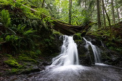 Waterfall in Moran St. Park (absencesix) Tags: longexposure travel usa green nature water colors june forest walking iso100 waterfall washington unitedstates hiking events noflash northamerica orcasisland olga sanjuanislands hikes locations 2012 locale 21mm softwater geo:state=washington exif:focal_length=21mm exif:iso_speed=100 1424mmf28 activityaction apertureprioritymode objectsthings hasmetastyletag naturallocale selfrating4stars camera:make=nikoncorporation 06secatf11 exif:make=nikoncorporation geo:countrys=usa exif:lens=140240mmf28 exif:aperture=ƒ11 subjectdistanceunknown nikond800e 2012travel exif:model=nikond800e camera:model=nikond800e june172012 orcasisland0617201206182012 geo:city=olga olgawashingtonusa 48°3851n122°4951w geo:lon=12283091448 geo:lat=4864750367