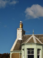 Perched on the Chimney (Jani Helle) Tags: chimney bird scotland seagull perched portpatrick dumfriesandgalloway portphdraig northcrescent september2011
