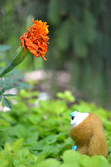 Hello, Flower (Ceci  Cuteness) Tags: blue brown white flower bunny green wool leaves felted toy moss succulent pair felt needle lane kit creature marigold rosette utada burble hikki jacabob jacabunny