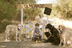 214/366 When life hands you lemons... (PamK*) Tags: boy dogs puppies lemons lemonadestand ourdailytopic