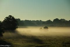 Golden 52-34 (Mark.W.E) Tags: morning light horses nature fog rural landscape dawn golden scenery natural sigma pasture dew sigmalens canon60dcanon