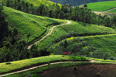 Curves (Fevzi DINTAS) Tags: curves hills forest mountain village house cottage farm field rice growing working slowlife lifestyle travel amazing holiday visit tourism asia thailand places destinations trees roads lines graphics nature landscape paza140 nationalgeographic
