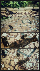 I'll probably be late (Melissa Maples) Tags: antalya turkey trkiye asia  apple iphone iphone6 cameraphone multipanel tetraptych summer animals kitties cats me melissa maples selfportrait woman flipflop shoe foot babies kittens