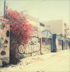 alley (lawatt) Tags: alley murals bougainvillea flowers sanfrancisco polawalk missiondistrict film instant theimpossibleproject color600 slr680