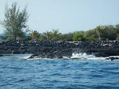DSCN2022 (Frank and Myra Fan) Tags: bigisland hawaii monkseal